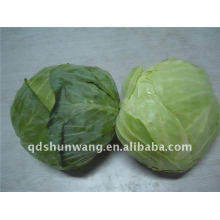 2015 fresh round cabbage
