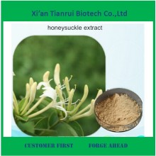 Ácido clorogénico 95% Fontes Honeysuchle Flores Extracto