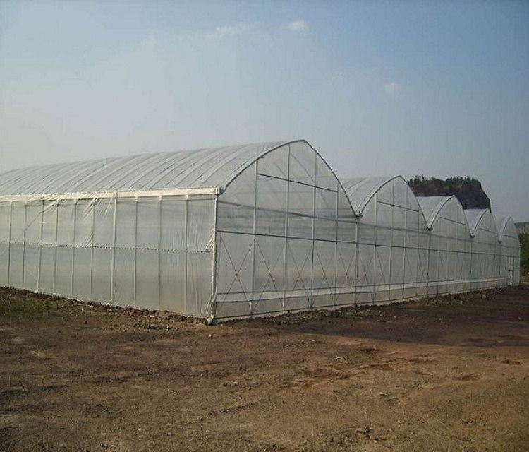 multi span greenhouse (3)