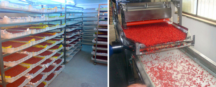 Goji Berry drying, grading procedure