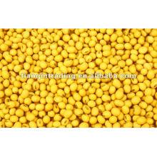 Gelbe Mungobohnen