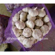 Chinese garlic 20kg mesh bag