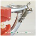 Fabricant directement vente pratique modèle dentaire avec de la cire fixe vis dents 13007