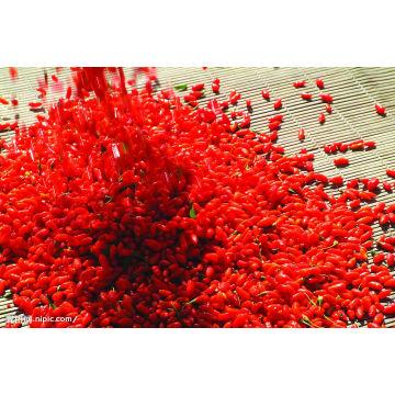 Chinese Dried Wolfberry Goji Berries