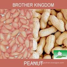 Peanut/Peanut kernel/Peanut in shell