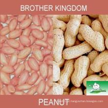 Amendoim, amendoim, amendoim, amendoim, concha