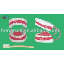 Modelo de escovação do dente gigante, modelo de cuidados dentários