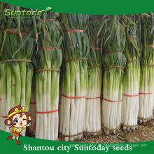 Suntoday vegetable F1 Organic garden comprar en línea English green Chinese scallion cebolla semillas a granel en proveedor (81009)