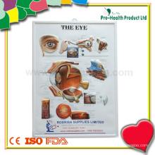 Graphique d'anatomie des yeux humains en relief