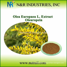 Reliable supplier olive leaf extract powder Oleuropein 10%/20%/40%