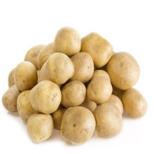 China Export Fresh Vegetable Potato