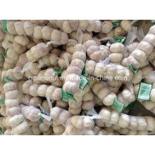 Normal White Garlic 5.0cm & 5.5cm 6p/Bag