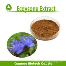 100% natural Ecdysone Extract 40% 50%