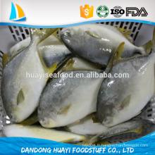 Frozen Golden Pompano / Pomfret Fish à la vente