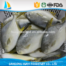 new landing good price good quality good pomfret