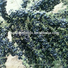 the black gojiberry wolfberry high quality