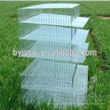 Layer Quail Battery Cage (Professional Factory)