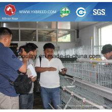 Geflügel-automatische Ei-Huhn-Käfige
