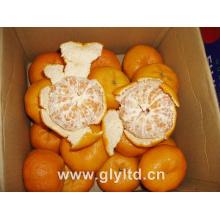Nova colheita chinesa de mandarina fresca