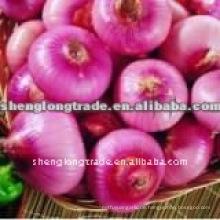 China rote Zwiebel Preis