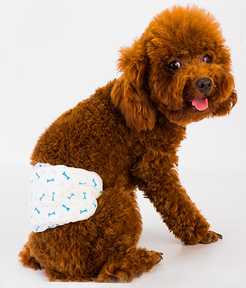 Male Dog Disposable Diaper