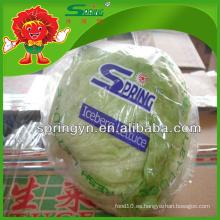 2015 Lechuga de iceberg verde decorativa forma china