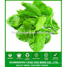NMS01 Tuifu Comprar semillas de vegetales verdes, semillas de espinaca malabar