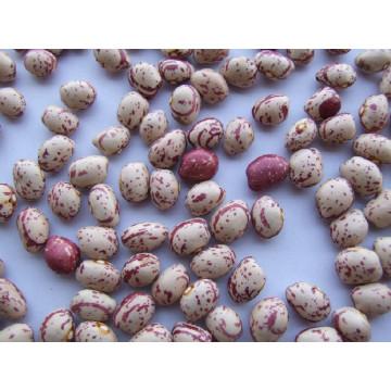 Neue Runde Licht Speckled Kidney Bean