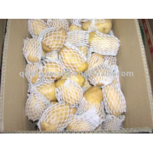 fresh holland potato supplying