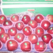 2016 New Crop Fresh Red Apple