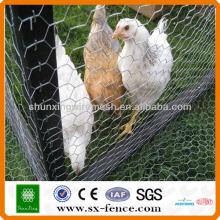 Hexagonal malha de arame decorativos galinha (ISO9001: 2008 fabricante profissional)