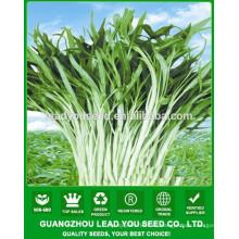 NWS02 Semillas de hortalizas para al aire libre, semillas de espinacas proveedor