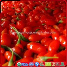 100% Bio Goji Goji Beeren getrocknete Goji Beere mit hoher Exportquote