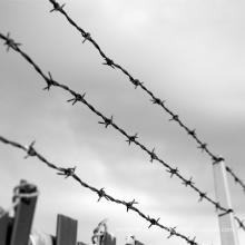 China Manufacturer Galvanized Barbed Wire