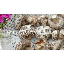 Champignons de fleurs séchées, légumes séchés, champignons Shiitake de Chine