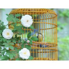Novo estilo gaiola de pássaro (TS-E129)