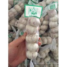 Crop Garlic of Good Quality