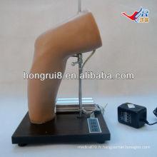 Modèle de formation à l'injection intra-articulaire de coude de luxe ISO, entraînement par injection de joint coudé