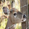 heavy galvanized high strength cattle deer wild fence