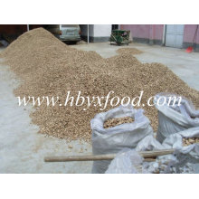 Jambe de champignons Shiitake séchée de Hubei