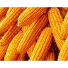 (Péptido de maíz) - Péptido de maíz de calidad alimentaria de primera calidad