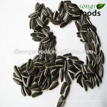 New Crop Strip Sunflower Seeds In Shell