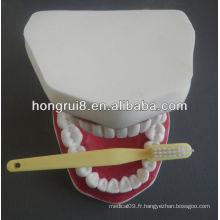 Modèle de soins dentaires médicaux de style nouveau, modèle agrandi de santé dentaire