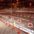 Avicultura de equipos de alimentación y sistema potable