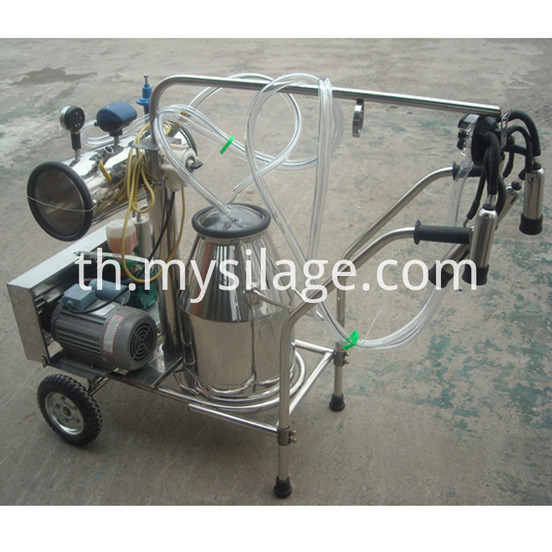 Milking Machine with One Bucket for cow