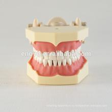 32 шт съемные зубы мягкой резинки преподавания стоматологических модель 13008, замена зубов Сиут для Frasaco челюсти