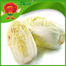 Top quality chinese long cabbage