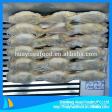Croaker jaune de petite taille à vendre Chine Yellow Croake