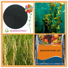Natural Soluble Organic Seaweed Extract Fertilizer