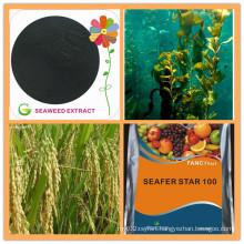 Organic Fertilizer Brown Seaweed Extract